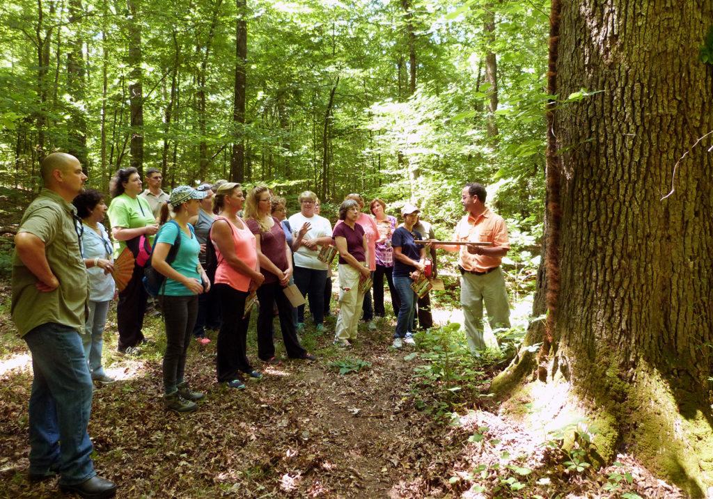 Teachers examining a very large white oak
