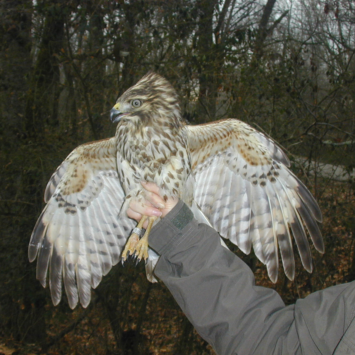 Wildlife Research for Forestry and Wildlife