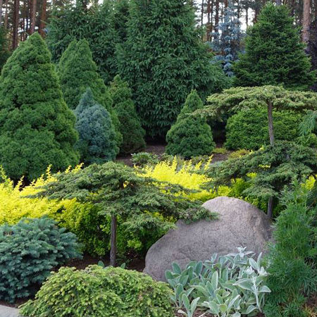 Mixed Conifer Collection