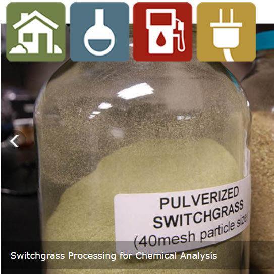 processing switchgrass